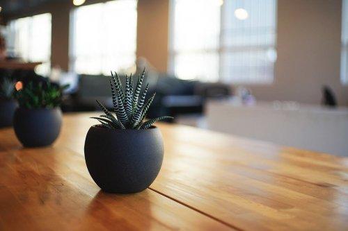 Algo más que plantas decorativas